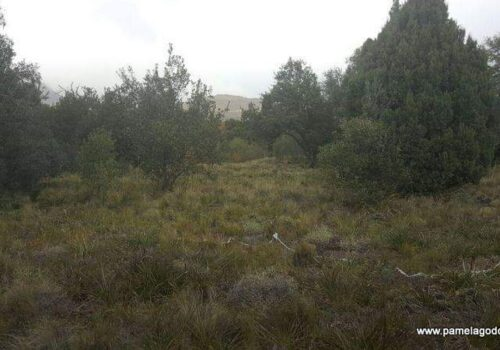 VENTA DE LOTE UBICADO EN BARRIO LOS RISCOS, San Martín de los Andes.